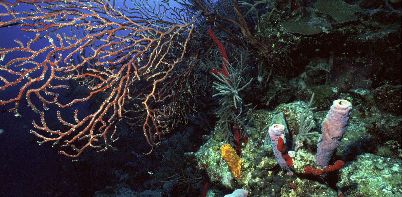 Águas de Timor com maior biodiversidade do Mundo | Beachcam